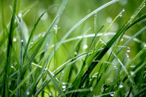谷雨|春渐远,夏将至